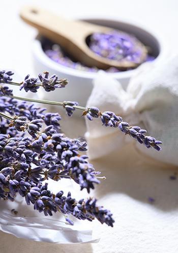 Lavender - Natural Remedies