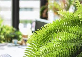 5 Plants that Prevent and Remove Mold - Boston Fern