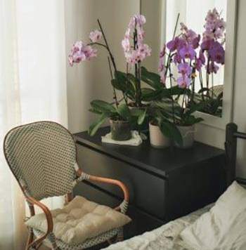 5 Plants that Prevent and Remove Mold - Orchids