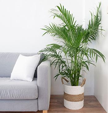 5 Plants that Prevent and Remove Mold - Palms