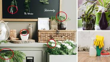 5 Plants That Prevent And Remove Mold