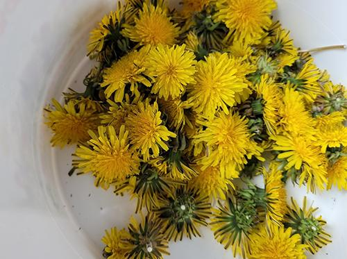 Dandelion Syrup For Cholesterol and Blood Sugar Control - Step 1