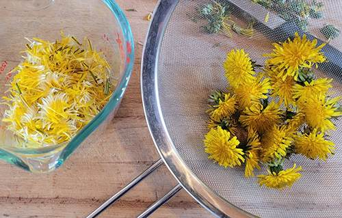 Dandelion Syrup For Cholesterol and Blood Sugar Control - Step 2
