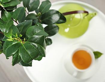 Green Tea - Benefits