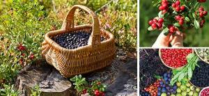 10 Berries You Should Look For In The Woods - Template Cover
