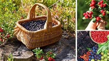 10 Berries You Should Look For In The Woods