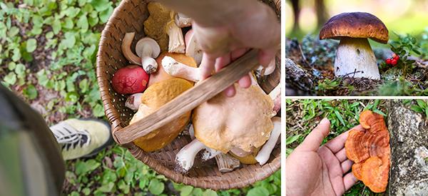 10 Mushrooms You Should Forage This Summer