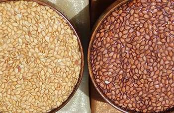 Common Flax - Brown vs Gold