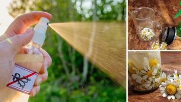 DIY Natural Tick and Flea Repellent For Pets