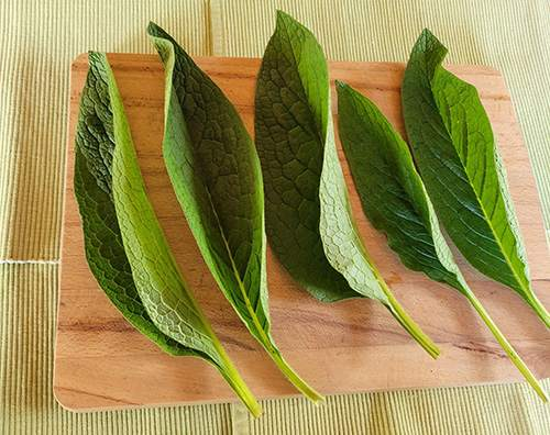 How To Make A Comfrey Salve For Arthritis and Joint Pain - Step 1