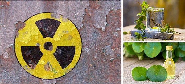How To Protect Yourself Against Radiation With These 5 Herbs