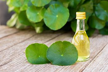 How To Protect Yourself Against Radiation With These 5 Herbs - Indian Pennywort