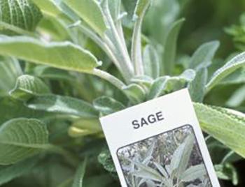 Sage Natural Remedies
