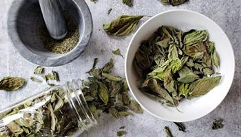 Wildfire Season Healing Herbs and Recipes for Lung Support - bASIL tEA