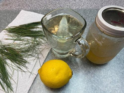 White Pine Tea - How to Drink